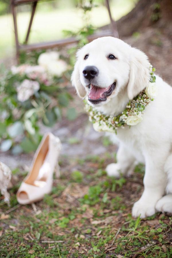 Golden Retriever Puppy Rig Bearer | 59&Bluebell Weddings and Events